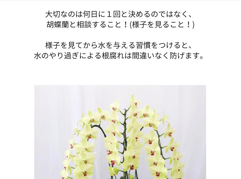 おうち胡蝶蘭ページ01