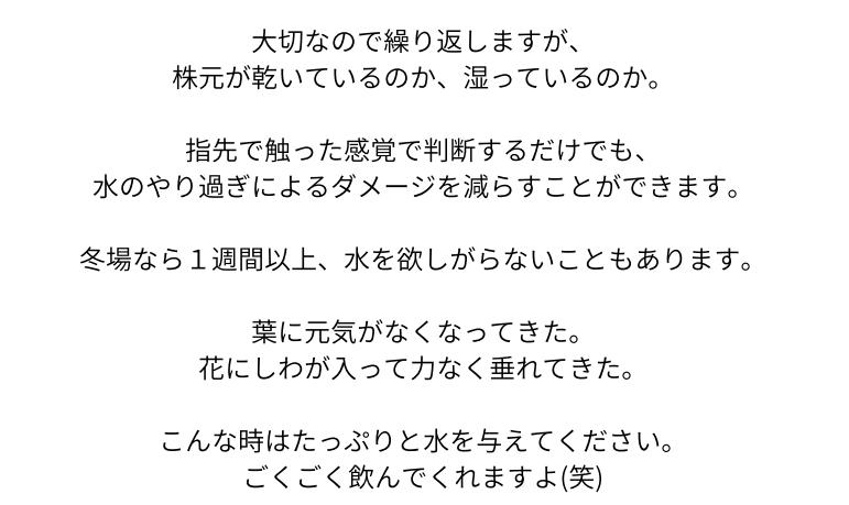 おうち胡蝶蘭ページ02