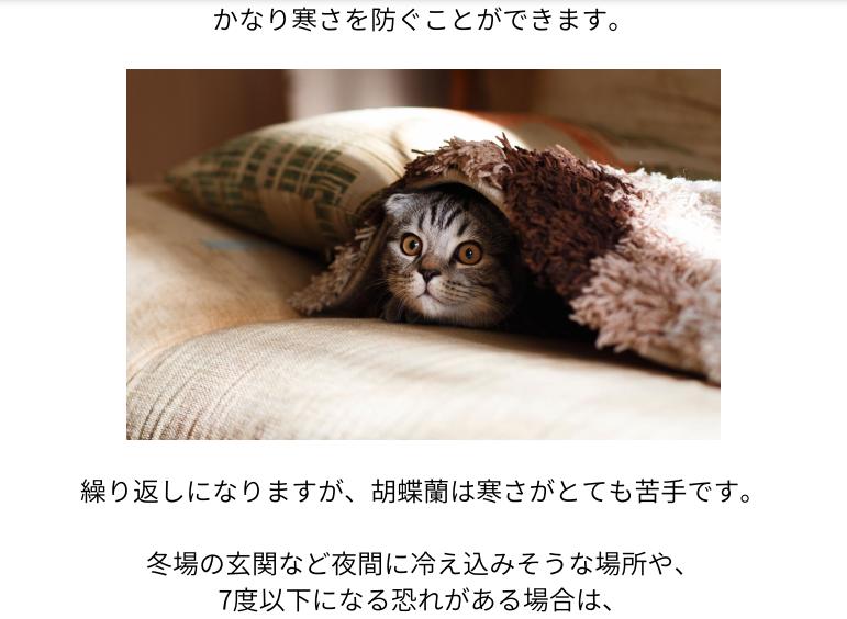 おうち胡蝶蘭ページ03