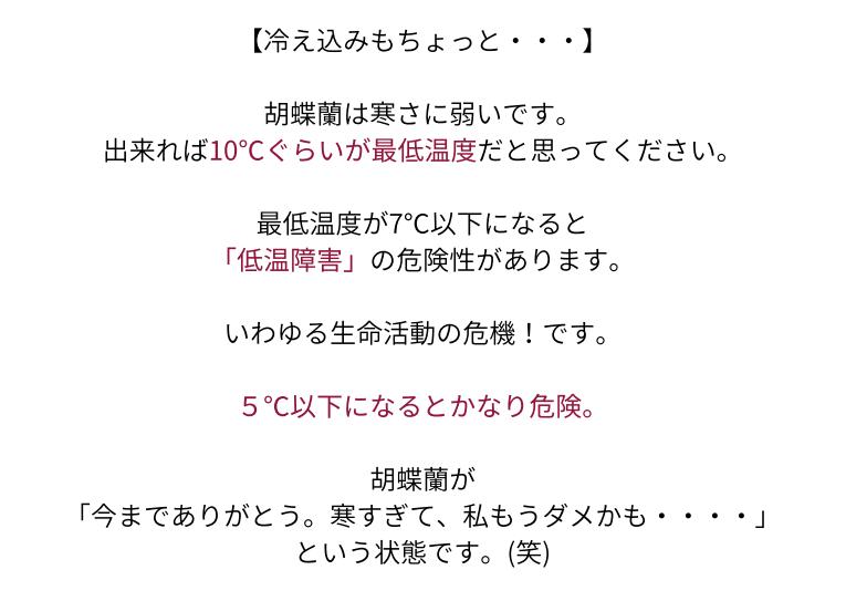 おうち胡蝶蘭ページ04